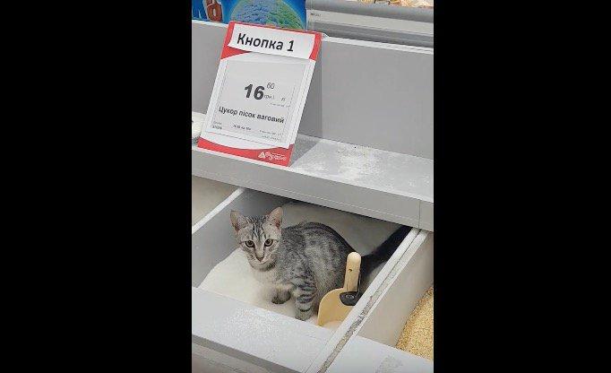 Вкиевском супермаркете кот перепутал сахар стуалетом