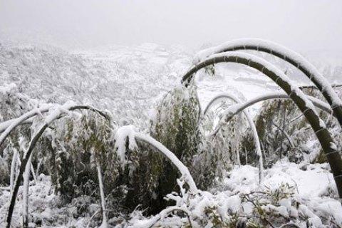 В «Поднебесной» из-за снегопадов погибло 13 человек